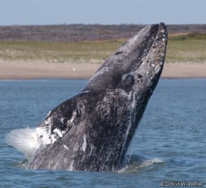SpringTide Whale Watching