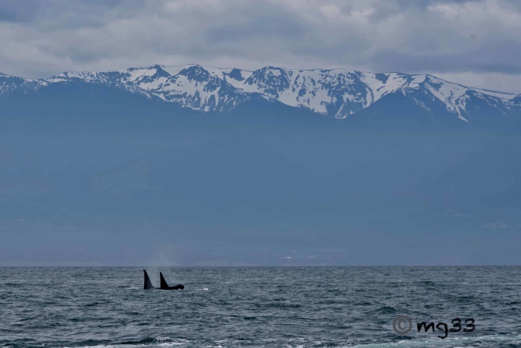 Whales and Majestic Views