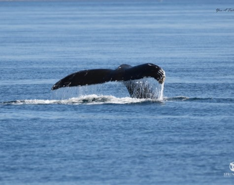 Scratchy Humpback Whale