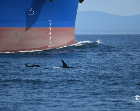 Whales and freighter