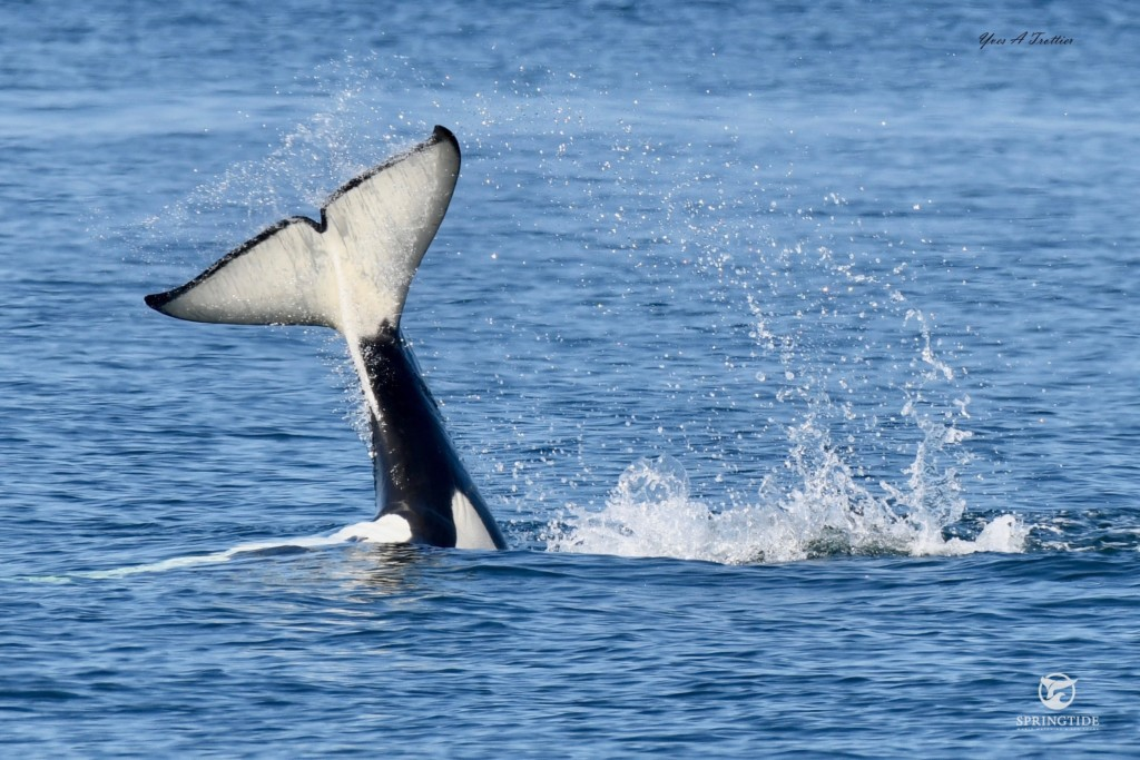 Porpoises, Humpbacks, and Orcas Oh My!