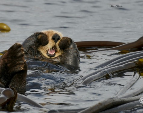 Harry the otter