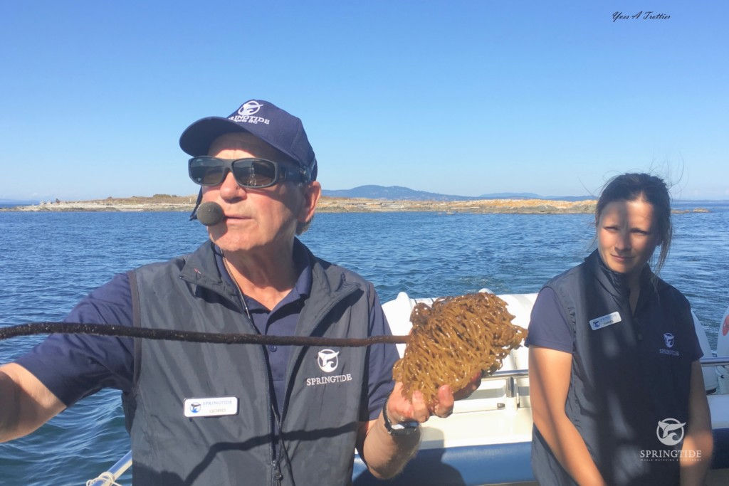 Naturalists with Bull Kelp
