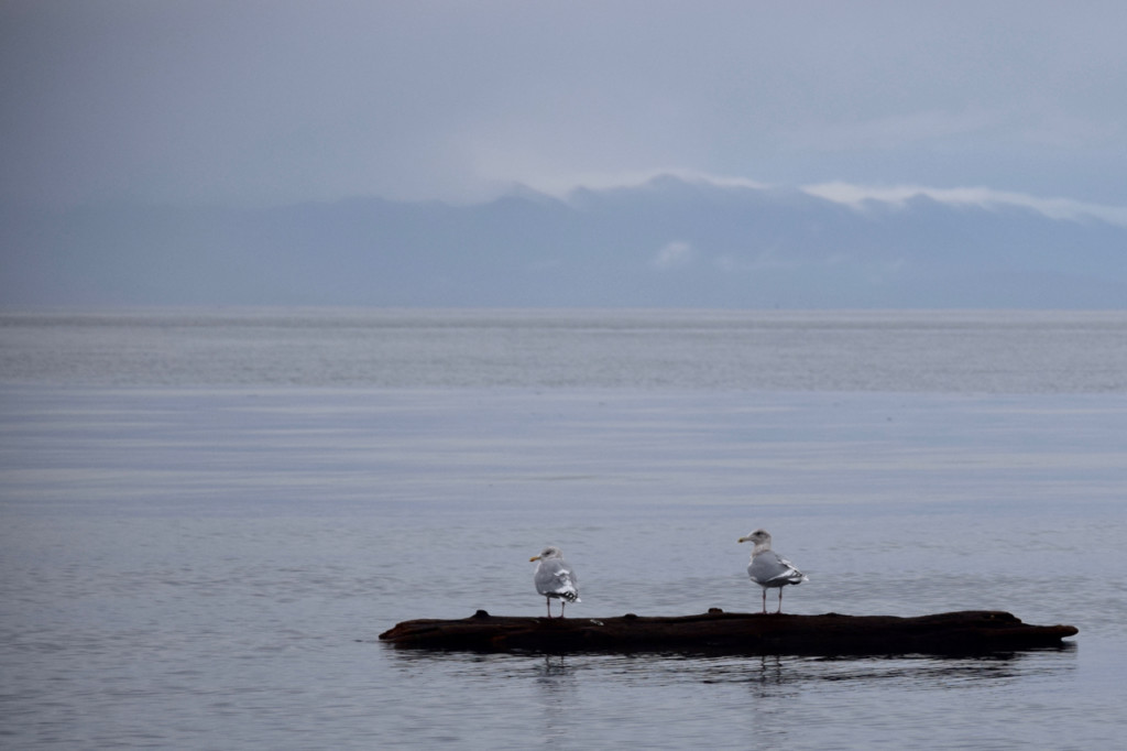 Sea birds on calm waters
