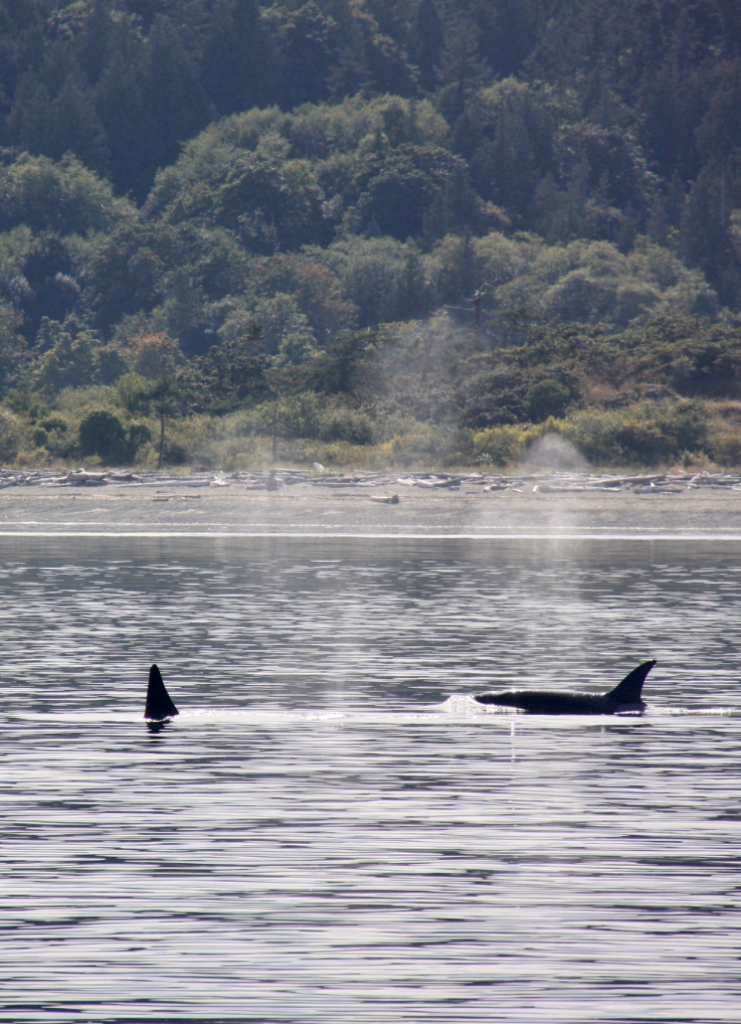 Sunshine and Killer Whales