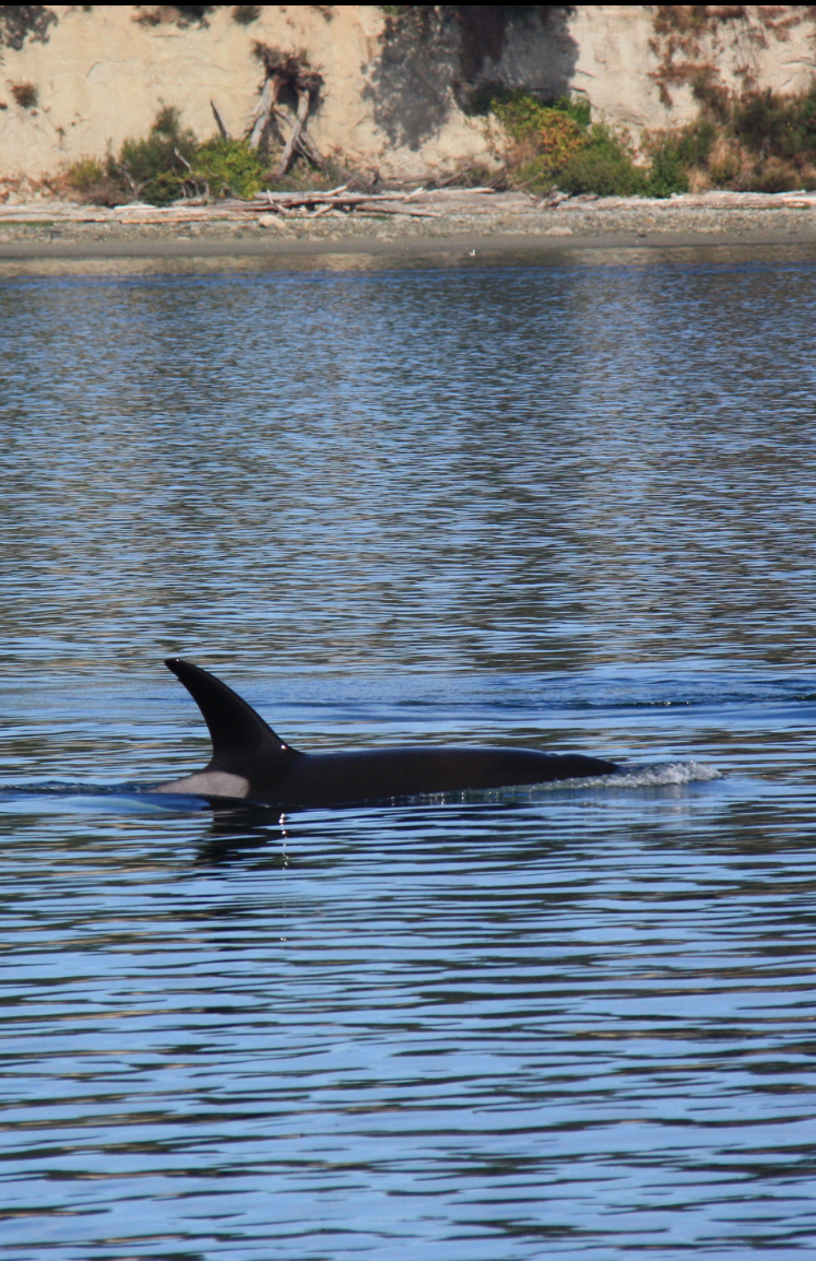 A close up on T60Es dorsal fin.