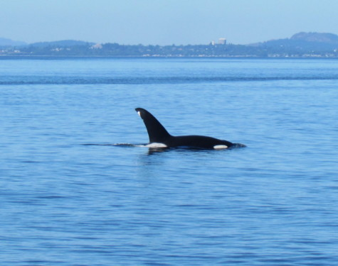 T19B Galiano. All Photo Credit to Naturalist Gord taken with a zoom lens.